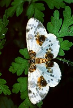 Mariposa. Butterflies are so cute. I love the color of its wings.