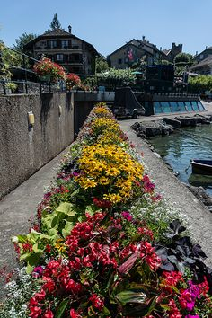 Flowers, Yvoire, France