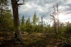 Oratunturi in Finnish Lapland. Photo by Jani Kärppä. #filmlapland #arcticshooting #finlandlapland