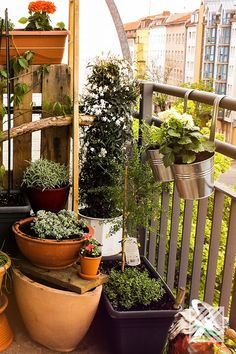 Die richtige Bewässerung Deiner Pflanzen ist das A und O. So machst Du es richtig. #Bewässerung #Pflanzen #Blumen #Balkon #Garten #Terrasse #Gartenideen #Garteninspiration Urban Gardening, Plants, Rain Water Collector, Garden Hose, Backyard Patio, Balcony, Flowers, Flora, Urban Homesteading