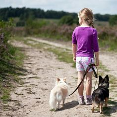 My little mini #dogwalker showing you even #chihuahua can walk handsfree