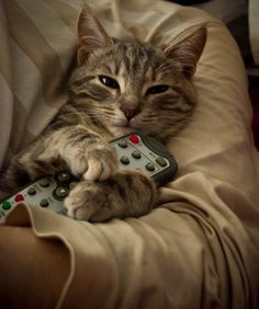 The kitten that loves to watch TV.