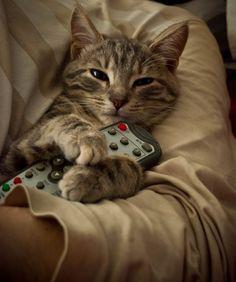 The Kitten by F-Lagerdahl.deviantart.com on @deviantART