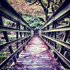 bridge into the redwoods