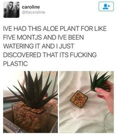 This plant deception: | 28 Pictures That Will Make You Laugh Way Harder Than You Should