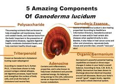 5 Amazing Components of Ganoderma Lucidum also known as Ling Zhi for the Chinese and Reshi for the Japanese.