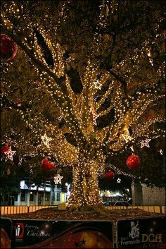 Christmas...I LOVE TO SEE THE TREES ALL LIT UP :)