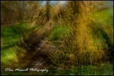 Buck park woods