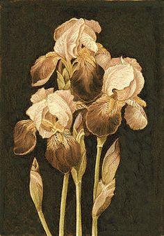 Iris Blooms by Cate McCauley