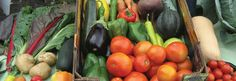 Local Food Systems website: Promoting strong local economies by building business ecosystems rooted in agriculture.