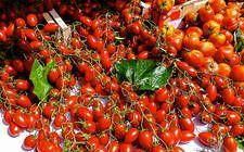 Frische Tomaten am Gemüsemarkt von Nizza © Susanne Zöhrer