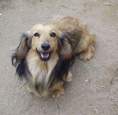 This is Shay. Hi Shay... you are beautiful.. I don't think there is a bad looking dachshund