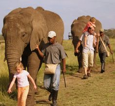 The Elephant Sanctuary - The Crags, Plettenberg Bay