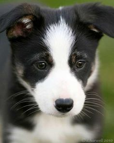 Los perros actuan cuando no los vemos
