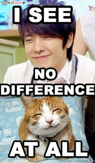 Nope. None. Seriously whats the difference?   Am i looking at 2 cute cats, or 2 cute pics of DongHae???
