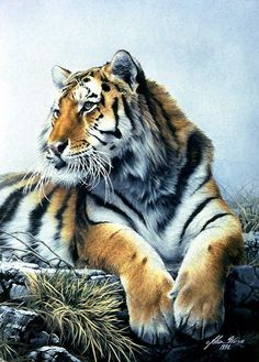 Tiger art ~ Awesome Colored Pencil Posting