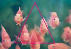 #fish #pink #love
