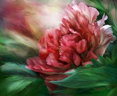Such a sexy peony in 50 shades of red.  This painting of a voluptuous red peony in full bloom is from the Language Of Flowers Collection of art by Carol Cavalaris.