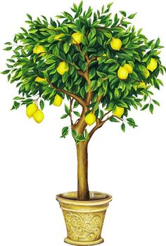 Image result for Citrus Topiary mural