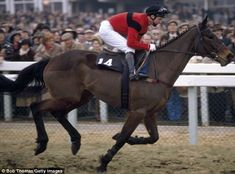 Dawn Run the only horse that won both the Champion Hurdle and the Gold Cup