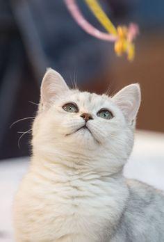 Feline Beauty: Super Cat Show 2014