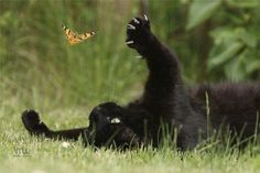 playing with butterfly