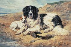 The Newfoundland: An Exhibition of Art and History Portraying This Noble, Loyal Breed on Horse & Countryside