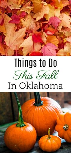 Things to do this fall in Oklahoma. Fun outdoor activities the whole family … – Wanderlust Fun Outdoor Activities, Autumn Activities, Outdoor Fun, Family Activities, Oklahoma City Things To Do, Fall Dates, Flying With A Baby, Travel Oklahoma, Stuff To Do