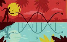 Gene drives promise unprecedented human control of the environment | Harvard Magazine