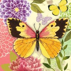 butterfly-flight-coral