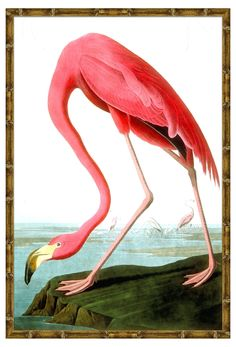 In this archival giclée print, the cool water and grassy riverbank contrast beautifully with the flamingo's vivid pink feathers. Beautifully framed in natural bamboo molding, this piece makes an...