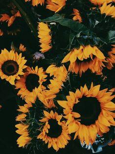 New Flowers Background Sunflower Ideas Cute Wallpapers, Wallpaper Backgrounds, Iphone Wallpaper, Trendy Wallpaper, Tumblr Wallpaper, Desktop Backgrounds, Nature Wallpaper, My Flower, Beautiful Flowers