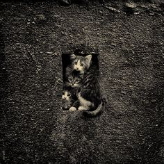 kittens, photo by Natalya Zinova