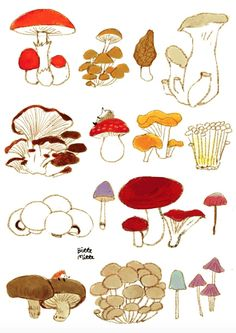 the good stuff Mushroom Paint, Mushroom Pictures, Painted Mugs, Wall Drawing, Abstract Line Art, Tea Art, Pattern Images, Jolie Photo, Illustrations And Posters