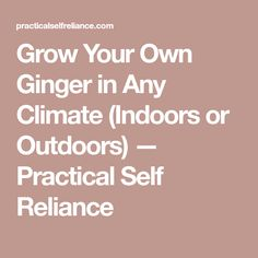 Grow Your Own Ginger in Any Climate (Indoors or Outdoors) — Practical Self Reliance