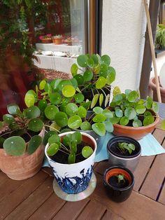 Mode Künstliche Frische Moosbälle Grünpflanze Hausgarten Party Dekoration Neue