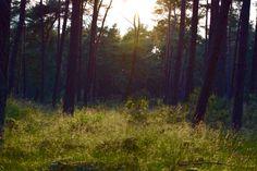 Deelerwoud