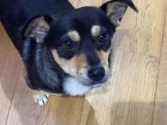 Roy  2 year old male Cross-Breed #cutedogs #cute #dogs #dog #pets #babblepets