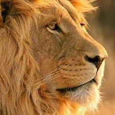 The undisputed #king of the #animalkingdom #travel #traveleze #traveling #holiday #holidays