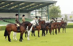 Show hunters: what judges like and what makes them cringe Read more at http://www.horseandhound.co.uk/features/show-hunters-what-judges-like-and-what-make-them-cringe-