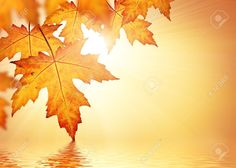 Fall Leaves Stock Photos Images, Royalty Free Fall Leaves Images ...
