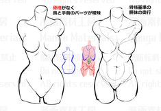 Discover recipes, home ideas, style inspiration and other ideas to try. Body Reference Drawing, Drawing Body Poses, Drawing Female Body, Female Torso, Art Reference Poses, Anatomy Reference, Female Bodies, Female Faces, Drawing Body Proportions