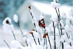 Winter   by Siniirr Kitty, Winter, Flowers, Plants, Little Kitty, Winter Time, Kitty Cats, Kitten, Plant