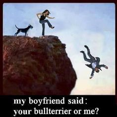 Boyfriend or Bull Terrier