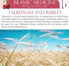 "Al-Muwaffaq Al-Baghdadi said, ""If you want to know the benefits of Talbeenah, then think of the benefits of barley water, especially if it is made of bran. There is nothing more beneficial than broth for one who eats a lot of barley. Islam Beliefs, Islamic Teachings, Islam Religion, Islamic Quotes, Islam Hadith, Arabic Quotes, Hindi Quotes, True Religion, Barley Benefits"