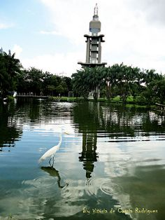 Mangal das Garças - Belém do Pará http://www.flickr.com/photos/gemeas_paraenses