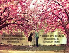 Free images about Kissing Under The Cherry Tree - MobDecor Tree Hd Wallpaper, Cherry Tree, Hush Hush, The Great Outdoors, Kissing, Cherry Blossom Tree, Outdoor Life, Off Grid, Outdoor Living