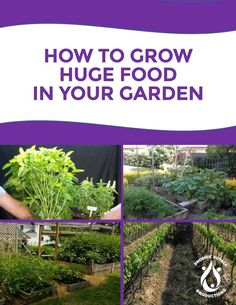 Grow Huge Food - Free eBooklet! Grow Organic, Help Teaching, Organic Recipes, Healthy Eating, Angel, Earth, Abstract, Garden, Plants