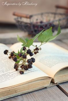 #While-away in the Woods #blackberries #book