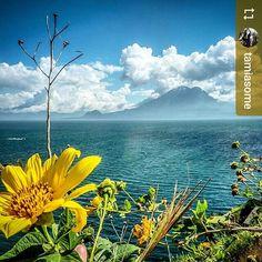 #Follow @tamiasome: #Beautiful view of #Lake #Atitlan and #volcano #Guatemala #ILoveAtitlan #AmoAtitlan #Travel #yellow #wildflowers http://OkAtitlan.com